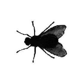 flyflew